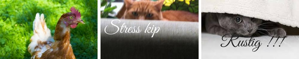 stress ontspanning gezondheid